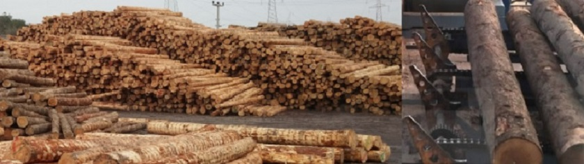 Wood-Lumber Industry